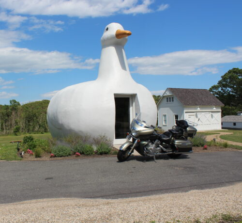 Bike And Duck
